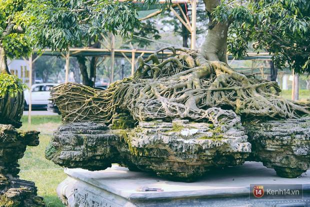 Cận cảnh cặp sanh cổ thụ được đại gia trả 4 tỷ đồng không bán ở Sài Gòn - Ảnh 4.