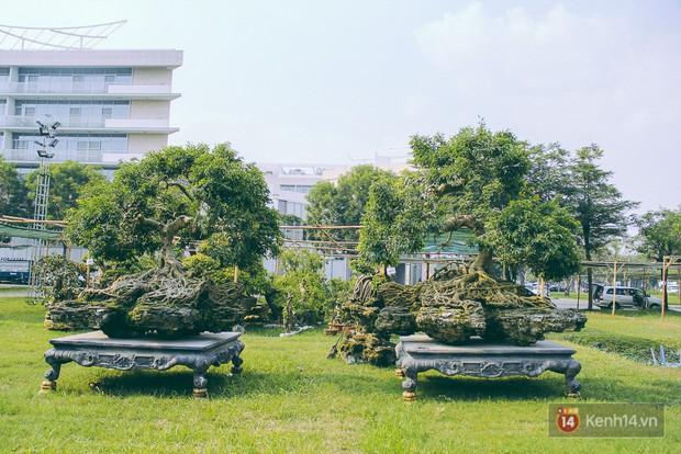 Cận cảnh cặp sanh cổ thụ được đại gia trả 4 tỷ đồng không bán ở Sài Gòn - Ảnh 1.