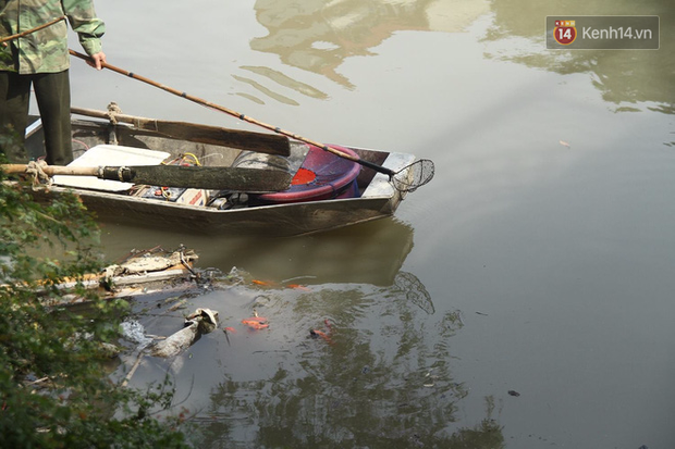 Clip, ảnh: Cá chép tiễn Táo quân vừa bơi tới cầu Diễn đã bị chích điện lôi lên bờ - Ảnh 3.