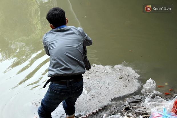 Clip, ảnh: Cá chép tiễn Táo quân vừa bơi tới cầu Diễn đã bị chích điện lôi lên bờ - Ảnh 16.