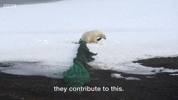 Nhìn những loài vật chết thảm thương vì rác thải của con người, ai cũng nghẹn ngào và quan ngại về ô nhiễm môi trường - Ảnh 2.