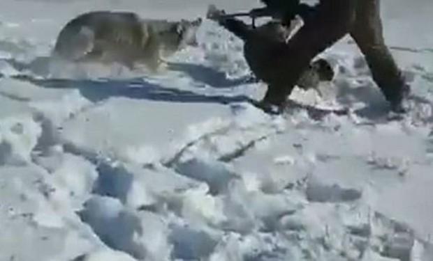 Đá vào xác chó sói vì tưởng con vật đã chết, thợ săn thất kinh vì pha trả thù bất ngờ - Ảnh 3.