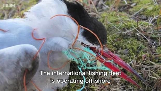 Nhìn những loài vật chết thảm thương vì rác thải của con người, ai cũng nghẹn ngào và quan ngại về ô nhiễm môi trường - Ảnh 3.