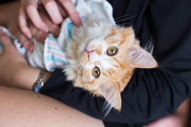Cặp vợ chồng trẻ gây bão mạng xã hội vì bộ ảnh hạ sinh ra mèo - Ảnh 10.