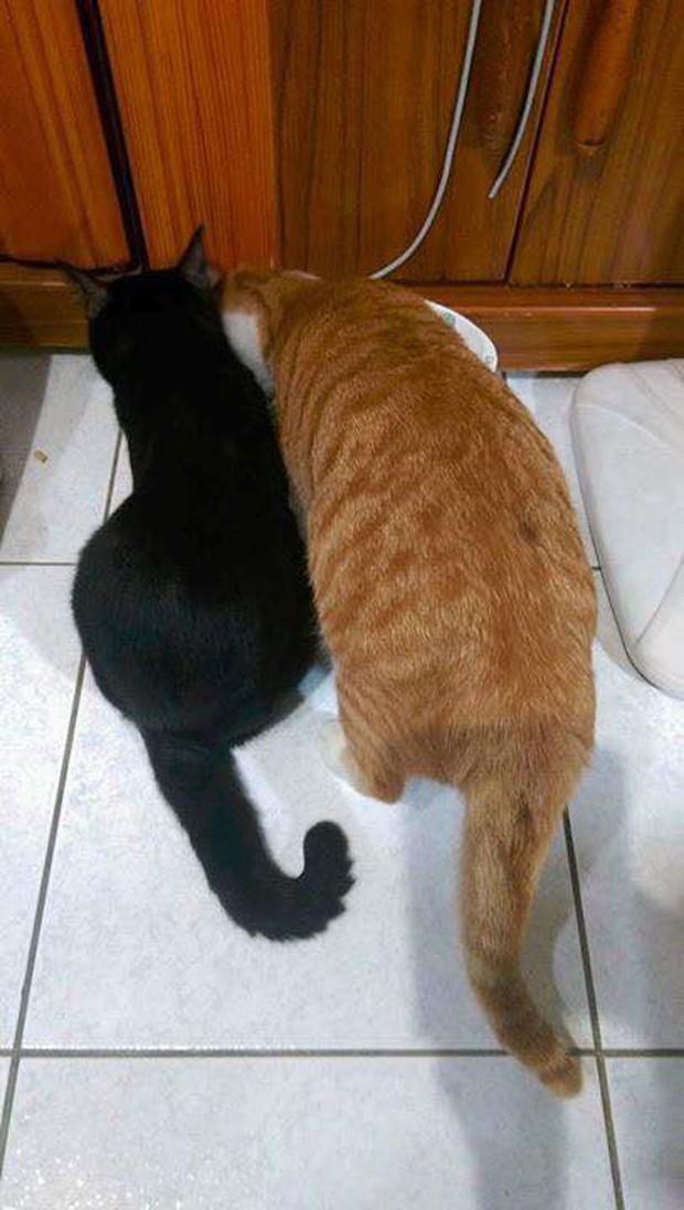 Hội thi sen mát tay toàn quốc, nuôi con mèo thành con lợn - Ảnh 2.