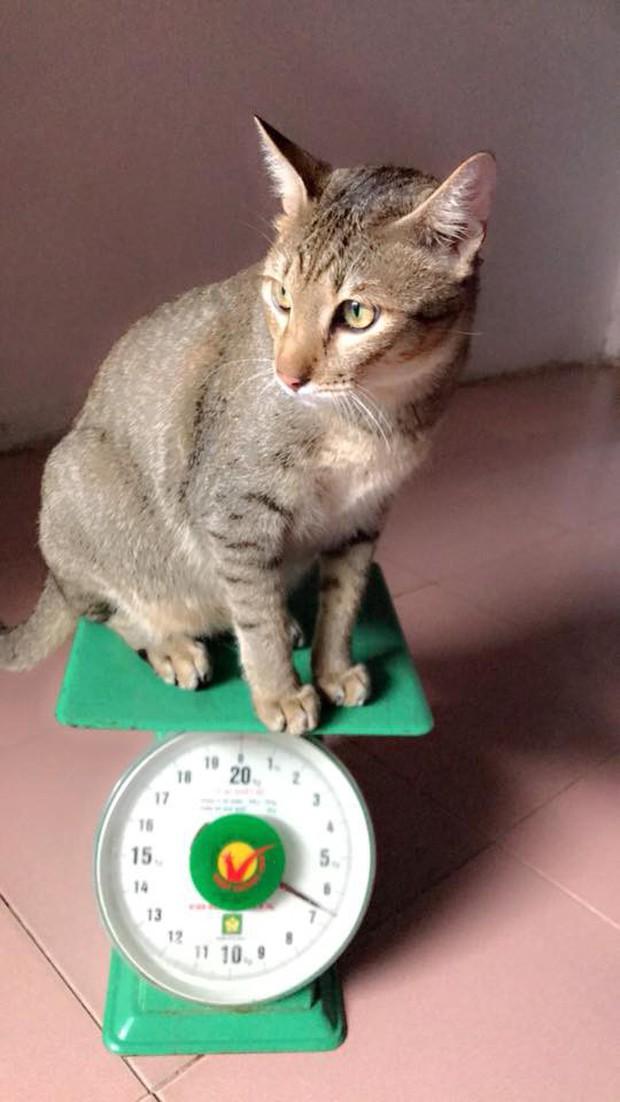 Hội thi sen mát tay toàn quốc, nuôi con mèo thành con lợn - Ảnh 3.