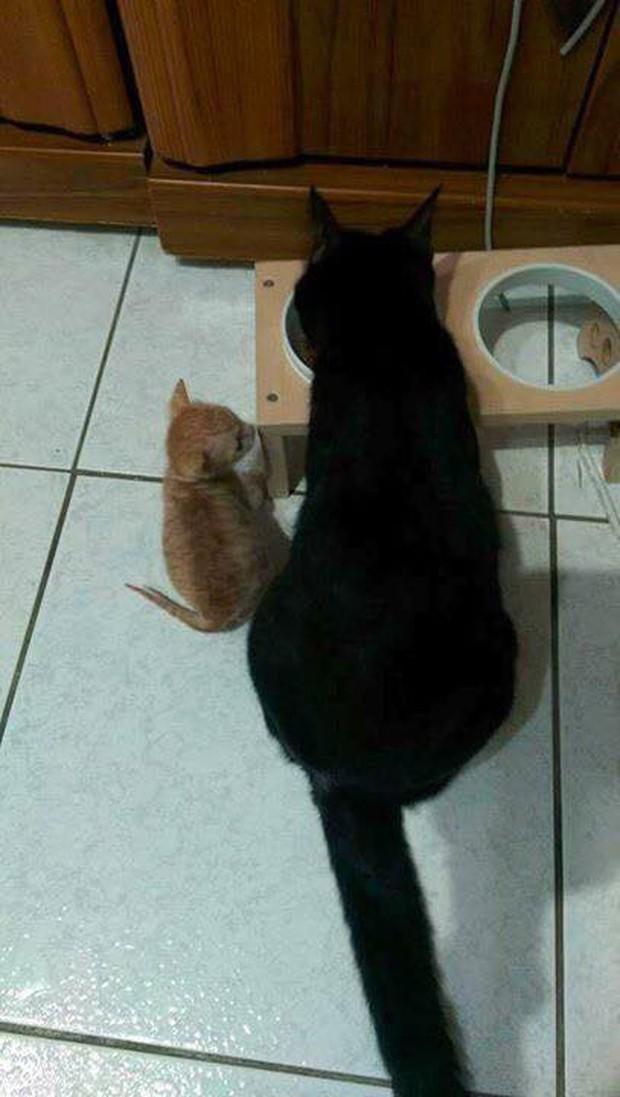 Hội thi sen mát tay toàn quốc, nuôi con mèo thành con lợn - Ảnh 1.