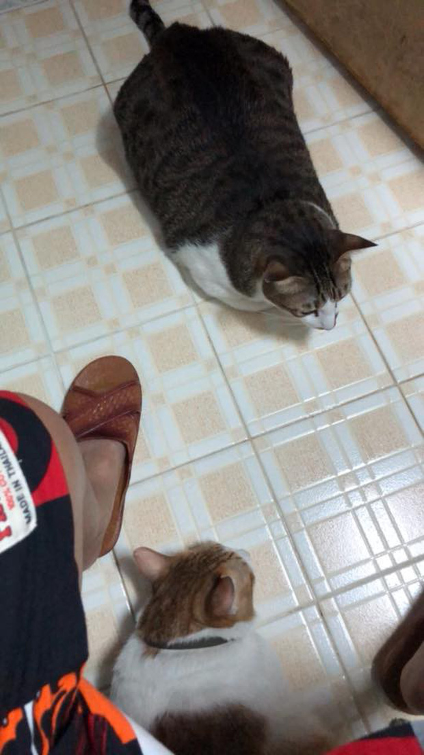 Hội thi sen mát tay toàn quốc, nuôi con mèo thành con lợn - Ảnh 5.