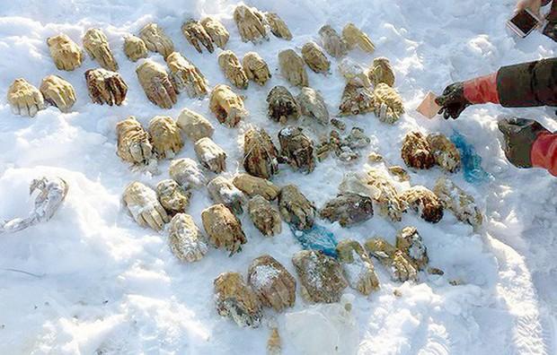 Tìm ra nguồn gốc 54 bàn tay người ở Nga - Ảnh 1.