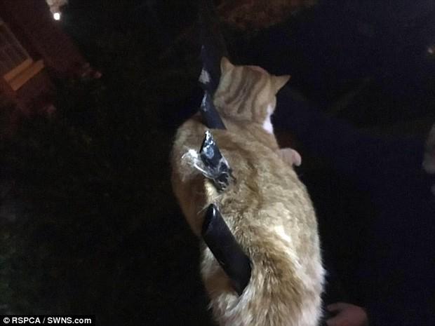 Bị 3 ống thép đâm qua người, chú mèo 9 mạng vẫn sống sót đầy kỳ tích, bình tĩnh chờ đội cứu hộ - Ảnh 3.