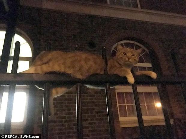 Bị 3 ống thép đâm qua người, chú mèo 9 mạng vẫn sống sót đầy kỳ tích, bình tĩnh chờ đội cứu hộ - Ảnh 4.