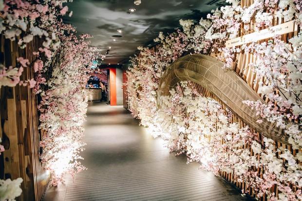 """Lễ hội hoa anh đào thu hút """"tín đồ"""" văn hóa Nhật tại Sài thành - Ảnh 1."""