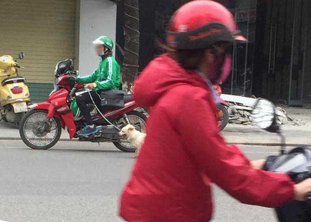 Thanh niên mặc đồng phục GrabBike tung tăng dắt chó đi dạo giữa phố đông - Ảnh 2.