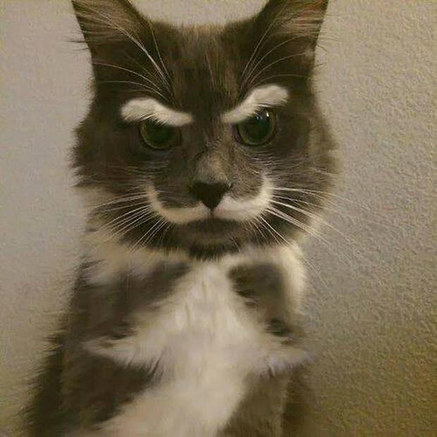 Những con boss có bộ lông mặt siêu hài và siêu dị, đẹp tự nhiên không cần dao kéo - Ảnh 2.