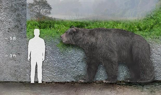 Phát hiện hóa thạch gấu có niên đại 120.000 năm tại Argentina - Ảnh 1.