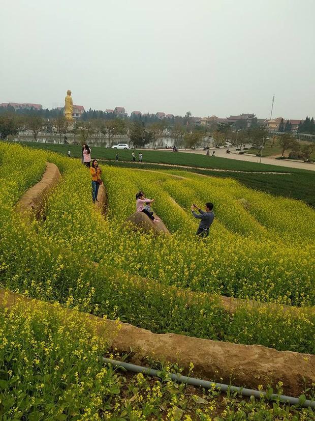 Cư dân mạng bỗng dưng phát hiện ra vườn hoa cải trắng và ruộng bậc thang chỉ cách Hà Nội có 20km - Ảnh 11.