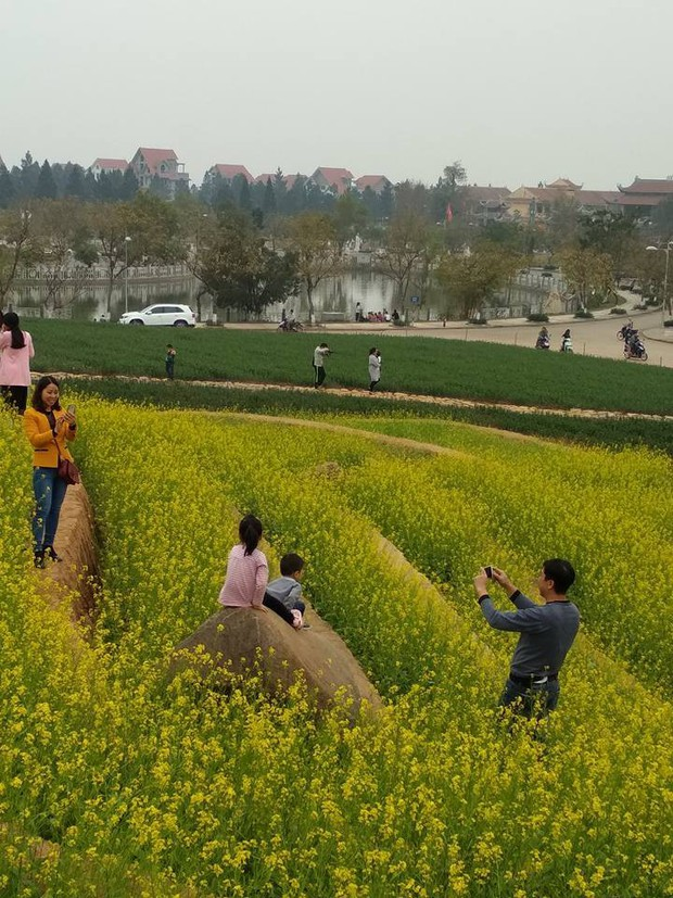 Cư dân mạng bỗng dưng phát hiện ra vườn hoa cải trắng và ruộng bậc thang chỉ cách Hà Nội có 20km - Ảnh 12.