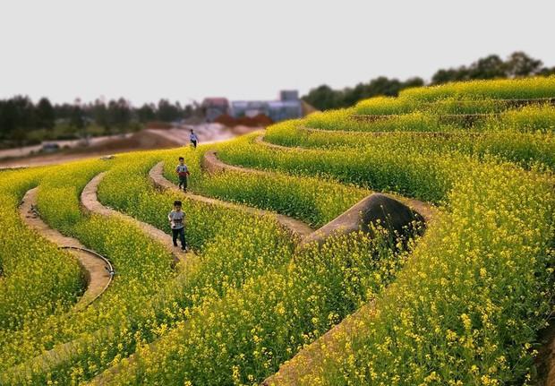 Cư dân mạng bỗng dưng phát hiện ra vườn hoa cải trắng và ruộng bậc thang chỉ cách Hà Nội có 20km - Ảnh 3.