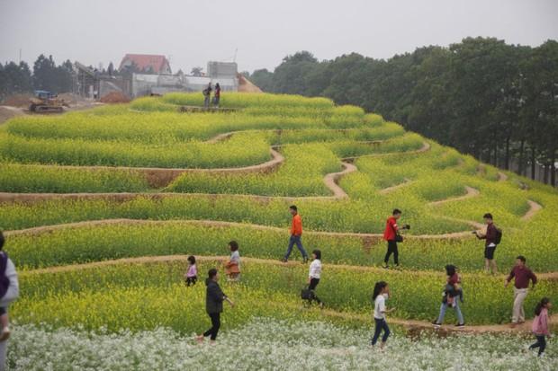 Cư dân mạng bỗng dưng phát hiện ra vườn hoa cải trắng và ruộng bậc thang chỉ cách Hà Nội có 20km - Ảnh 1.