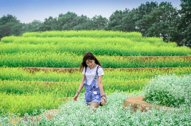 Cư dân mạng bỗng dưng phát hiện ra vườn hoa cải trắng và ruộng bậc thang chỉ cách Hà Nội có 20km - Ảnh 17.