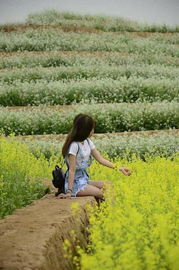 Cư dân mạng bỗng dưng phát hiện ra vườn hoa cải trắng và ruộng bậc thang chỉ cách Hà Nội có 20km - Ảnh 15.