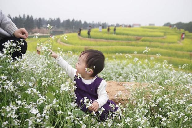 Cư dân mạng bỗng dưng phát hiện ra vườn hoa cải trắng và ruộng bậc thang chỉ cách Hà Nội có 20km - Ảnh 18.