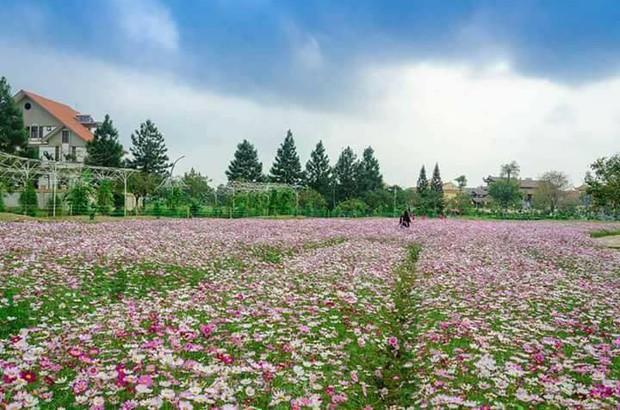 Cư dân mạng bỗng dưng phát hiện ra vườn hoa cải trắng và ruộng bậc thang chỉ cách Hà Nội có 20km - Ảnh 6.