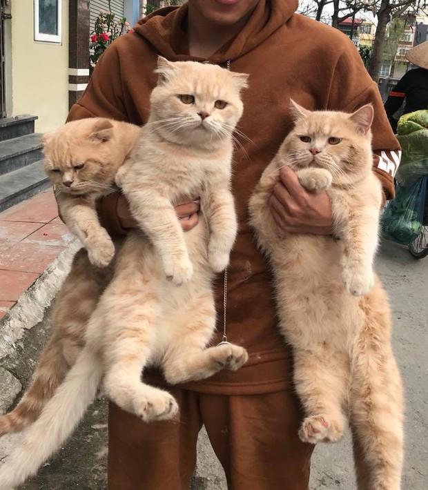 Lộ diện đàn con của chú mèo tên Chó nổi tiếng khắp Hải Phòng, đứa nào cũng đẹp trai giống bố! - Ảnh 3.