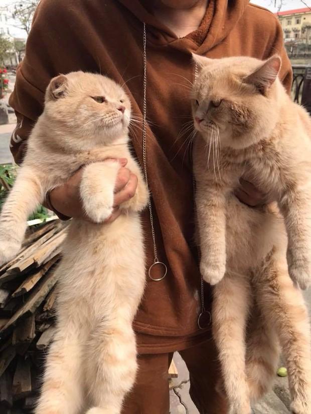 Lộ diện đàn con của chú mèo tên Chó nổi tiếng khắp Hải Phòng, đứa nào cũng đẹp trai giống bố! - Ảnh 4.