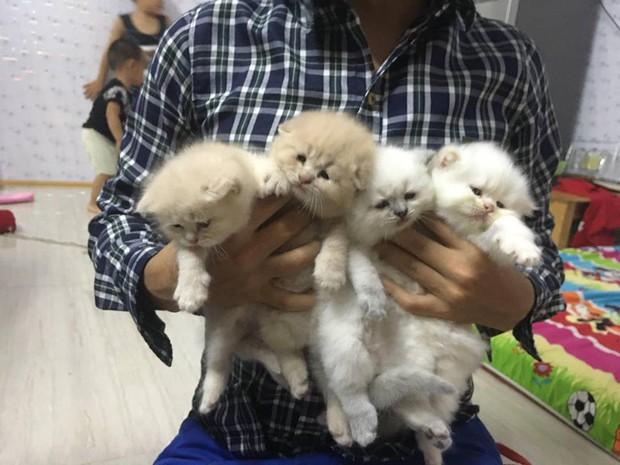 Lộ diện đàn con của chú mèo tên Chó nổi tiếng khắp Hải Phòng, đứa nào cũng đẹp trai giống bố! - Ảnh 5.