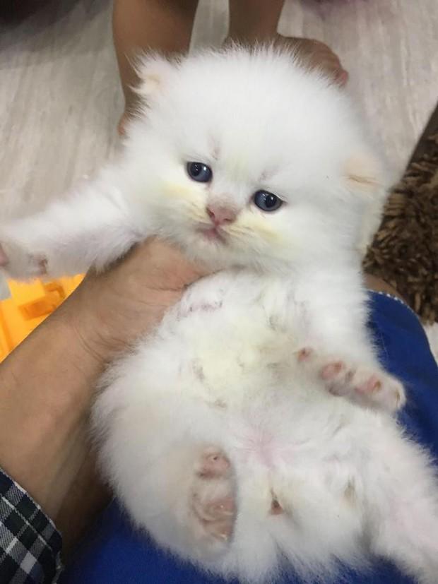 Lộ diện đàn con của chú mèo tên Chó nổi tiếng khắp Hải Phòng, đứa nào cũng đẹp trai giống bố! - Ảnh 6.