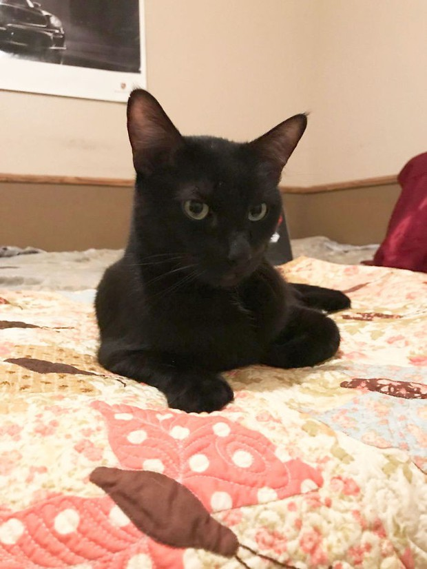 Chú mèo đi lạc 5 năm rồi bất ngờ trở về, nghe câu chuyện về chuyến hành trình ấy, ai cũng ngạc nhiên không thể tin được - Ảnh 1.