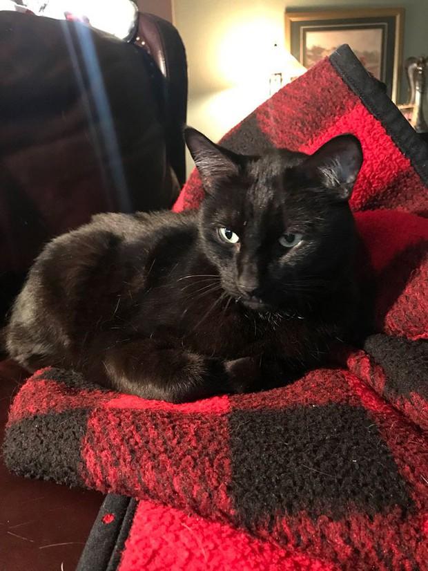 Chú mèo đi lạc 5 năm rồi bất ngờ trở về, nghe câu chuyện về chuyến hành trình ấy, ai cũng ngạc nhiên không thể tin được - Ảnh 4.