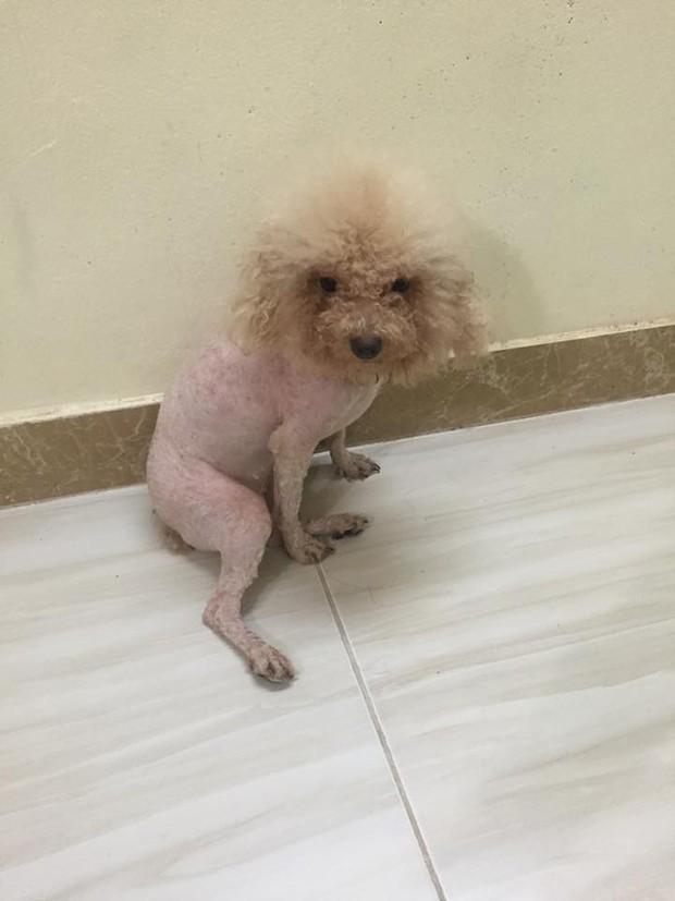 Clip: Cô bé xinh xắn khóc lóc nức nở vì không cứu được chó cưng thoát khỏi cảnh trụi lông - Ảnh 3.
