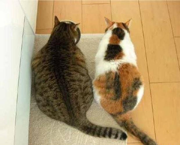 Minh chứng cho thấy béo hoàn toàn có thể lây qua đường tình bạn chỉ trong 2 tấm ảnh - Ảnh 2.