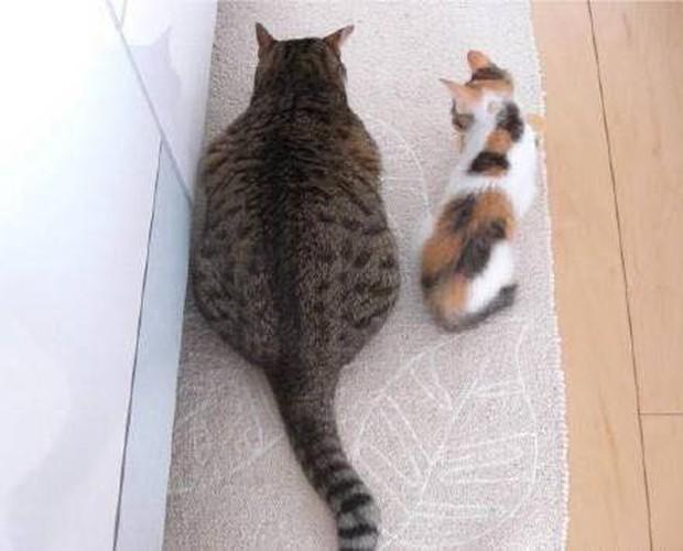 Minh chứng cho thấy béo hoàn toàn có thể lây qua đường tình bạn chỉ trong 2 tấm ảnh - Ảnh 1.