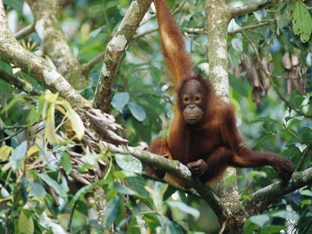 12 loài vật hoang dã đang đối diện nguy cơ tuyệt chủng, biến mất hoàn toàn khỏi Trái Đất - Ảnh 2.