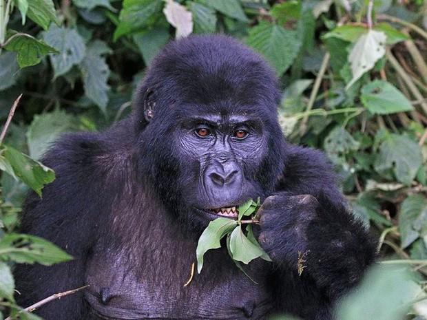 12 loài vật hoang dã đang đối diện nguy cơ tuyệt chủng, biến mất hoàn toàn khỏi Trái Đất - Ảnh 3.