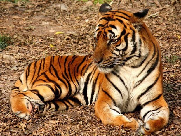 12 loài vật hoang dã đang đối diện nguy cơ tuyệt chủng, biến mất hoàn toàn khỏi Trái Đất - Ảnh 6.