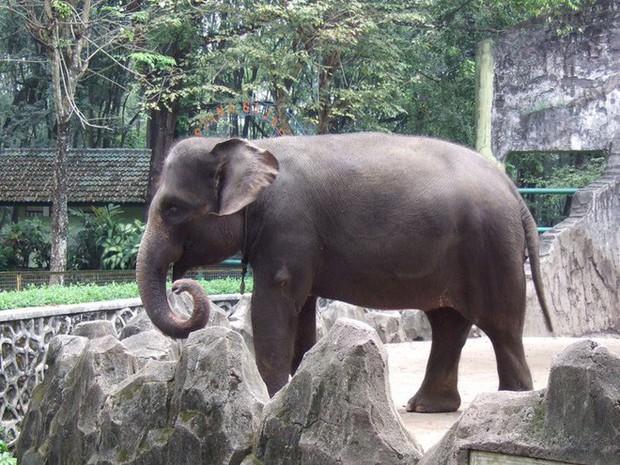 12 loài vật hoang dã đang đối diện nguy cơ tuyệt chủng, biến mất hoàn toàn khỏi Trái Đất - Ảnh 8.