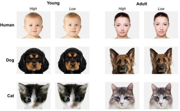 Lý giải khoa học đằng sau chú chó có khuôn mặt người đang gây bão mạng xã hội - Ảnh 4.