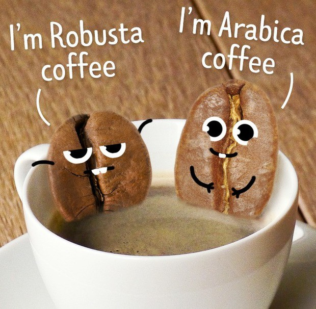 11 sai lầm bạn buộc phải tránh nếu muốn thưởng thức được một ly cà phê đúng chuẩn - Ảnh 3.