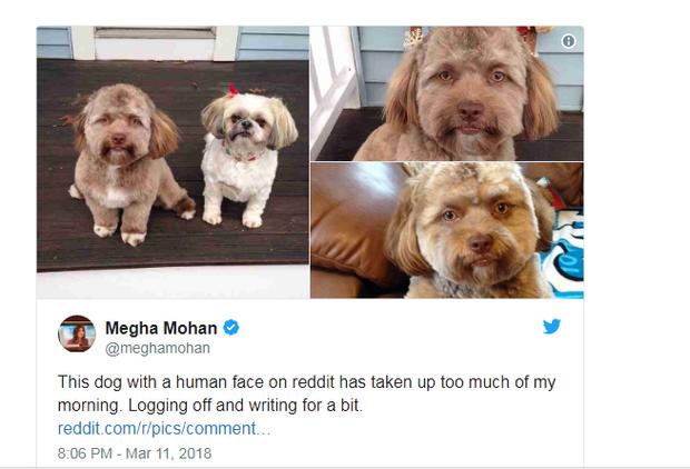 Lý giải khoa học đằng sau chú chó có khuôn mặt người đang gây bão mạng xã hội - Ảnh 1.