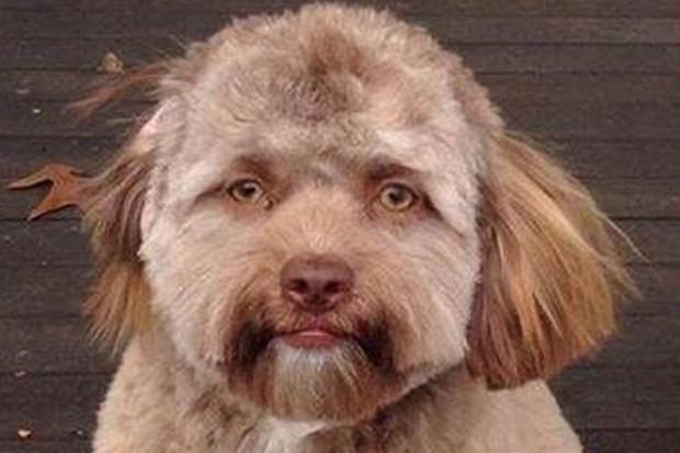Lý giải khoa học đằng sau chú chó có khuôn mặt người đang gây bão mạng xã hội - Ảnh 3.