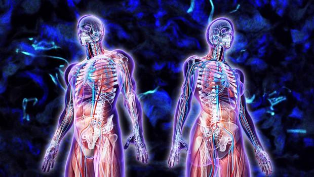 Phát hiện 1 bộ phận mới trên cơ thể con người - mở ra tiềm năng mới cho căn bệnh ung thư - Ảnh 1.