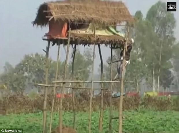Ấn Độ: Ngôi làng liên tục bị hổ tấn công, gây ra cái chết cho 22 người trong vòng một năm - Ảnh 3.