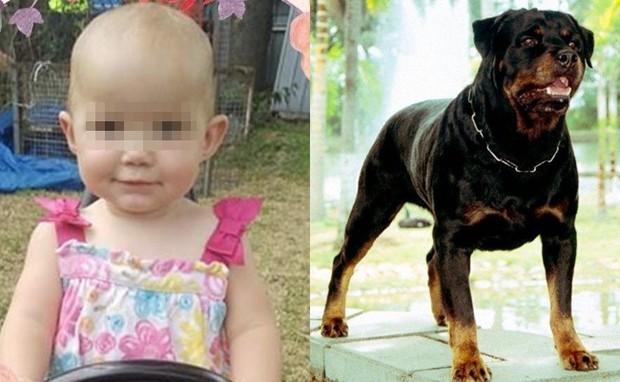 Dắt con gái 1 tuổi về nhà bà ngoại, mẹ đau đớn khi chứng kiến con bị chó hàng xóm tấn công tới tử vong - Ảnh 3.