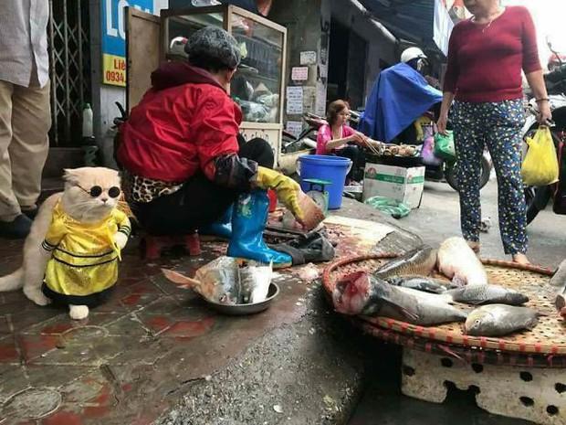 Hết bán cá lại trông phản thịt, chú mèo nổi tiếng khắp chợ Hải Phòng lên trang nhất tạp chí nước ngoài - Ảnh 2.