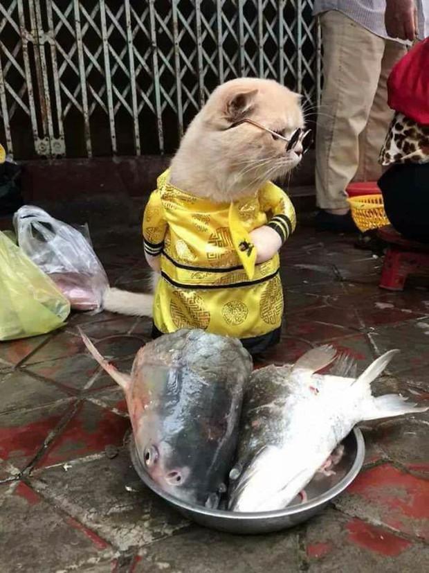 Hết bán cá lại trông phản thịt, chú mèo nổi tiếng khắp chợ Hải Phòng lên trang nhất tạp chí nước ngoài - Ảnh 3.
