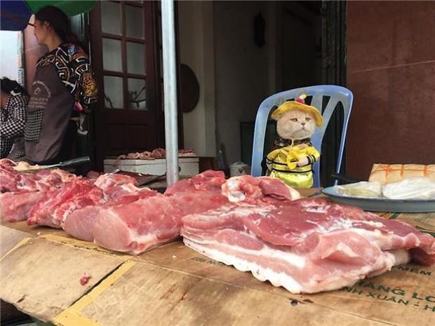Hết bán cá lại trông phản thịt, chú mèo nổi tiếng khắp chợ Hải Phòng lên trang nhất tạp chí nước ngoài - Ảnh 8.